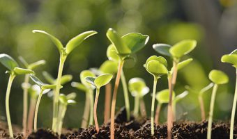 Free IPM Workshop at the Earth Center