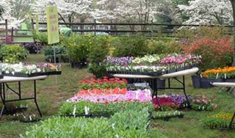 The Ultimate Plant Sale