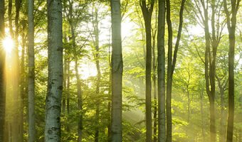 New Tree Licensing Law in New Jersey