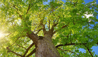 Continuing Education for NJ Licensed Tree Experts