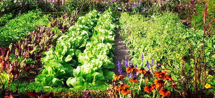 free online gardening class at rutgers
